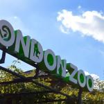 Віртуальна екскурсія до зоопарку Лондона
